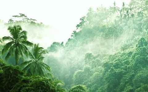Горные вечнозеленые и полулистопадные леса