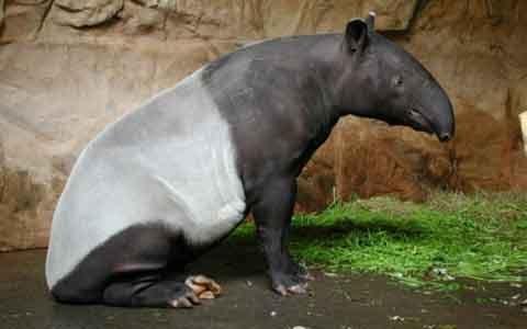 Фауна Таиланда: млекопитающие